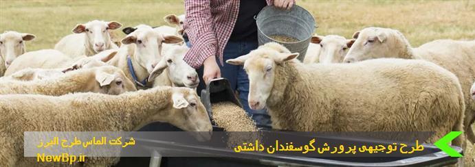 طرح توجیهی پرورش گوسفندان داشتی