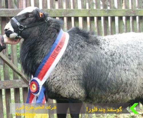 طرح توجیهی گوسفند چندقلوزا