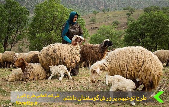 طرح توجیهی پرورش گوسفند داشتی