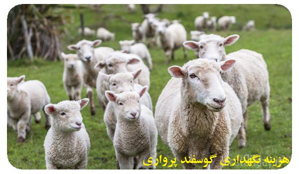 هزینه نگهداری گوسفند پرواری