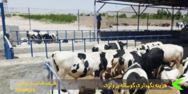هزینه نگهداری هر رأس گوساله پرواری