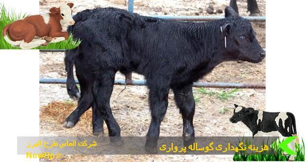 هزینههای نگهداری گوساله پرواری
