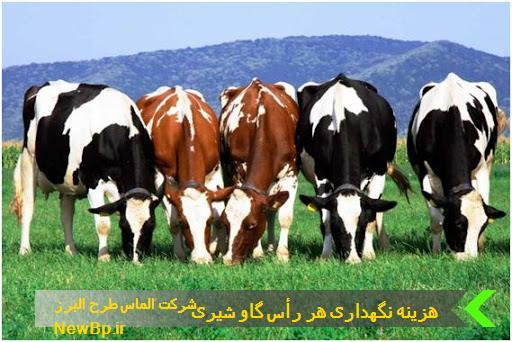 هزینه نگهداری هر رأس گاو شیری