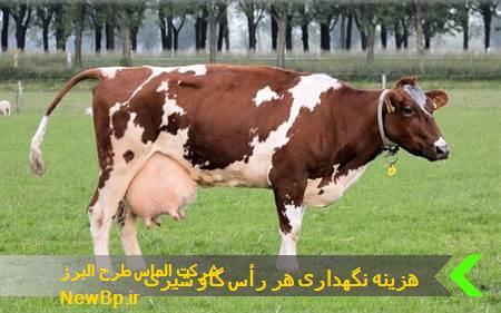 نگهداری هر رأس گاو شیری