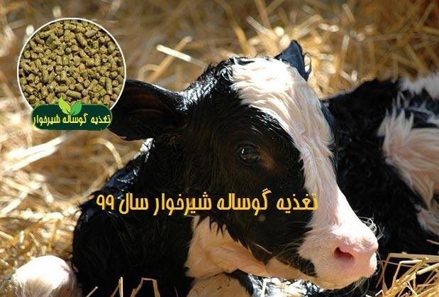 تغذیه گوساله شیرخوار