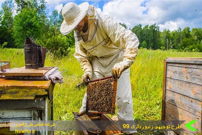 طرح توجیهی زنبورداری 99