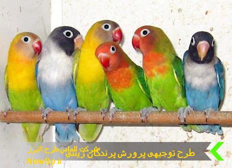 طرح توجیهی پرورش پرندگان زینتی