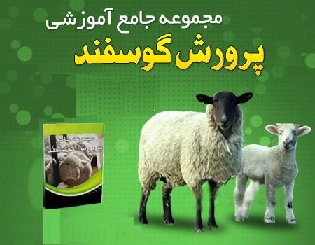 پکیج پرورش گوسفند
