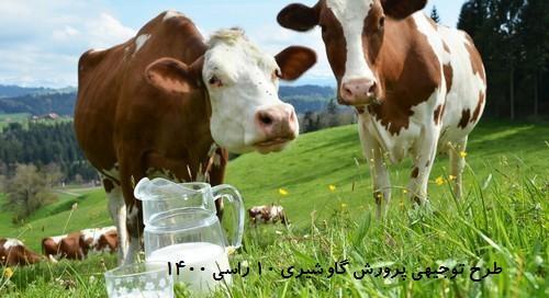 طرح توجیهی پرورش گاو شیری 10 راسی