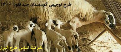 1-طرح توجیهی گوسفندان چند قلوزا