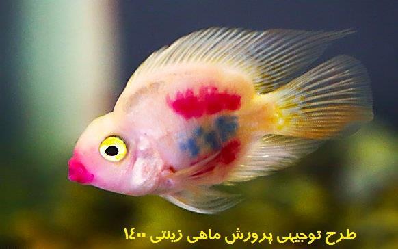 طرح توجیهی پرورش ماهی زینتی 1400