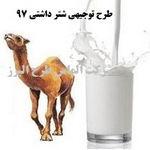 طرح توجیهی شتر شیری 97