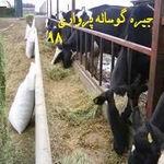 مدیریت تغذیه و جیره نویسی گوساله پرواری